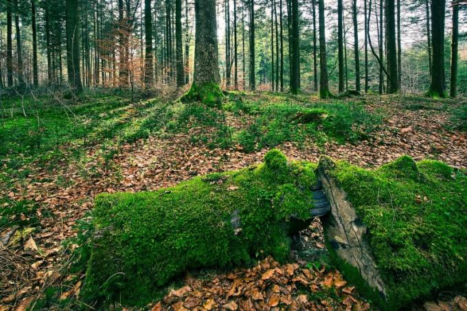 Прогуляйтесь в лесу или парке