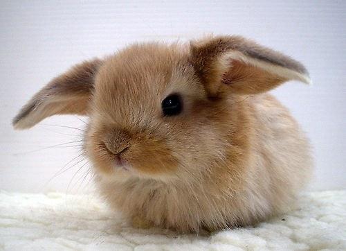 гладить кролика