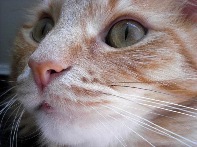 перевести кошку с сухого корма на нормальную пищу