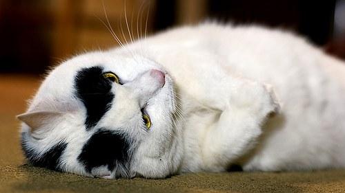 задержка родов у кошки