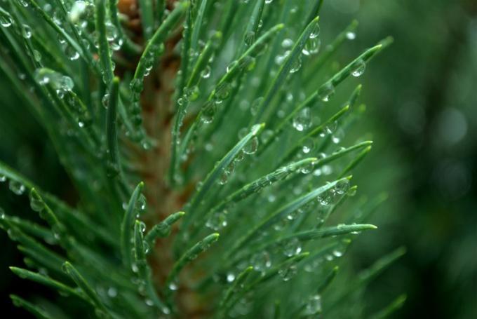Как найти относительную влажность