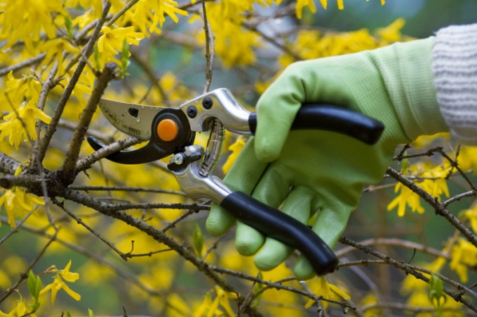 How to trim shrubs