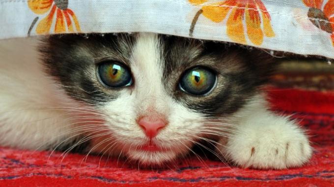 как отучить котенка от занавесок