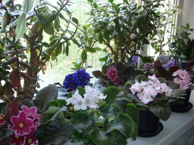 Как оживить замерзшие цветы