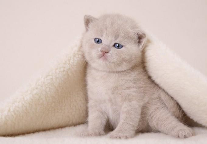 перевести котенка на корм