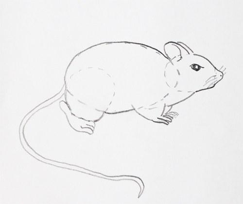 Как нарисовать <strong>мышь</strong> <b>карандашом</b>.