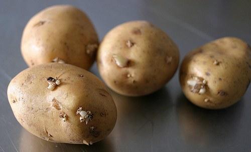 Как нарисовать картошку