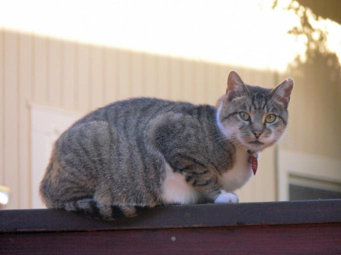 Как перевоспитать уличную кошку