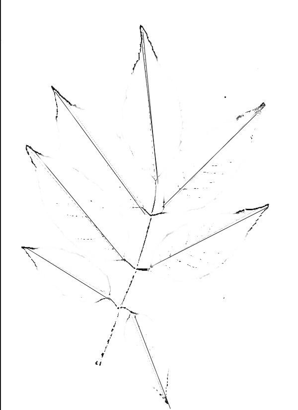 Нарисуйте центральную жилку сложного листа