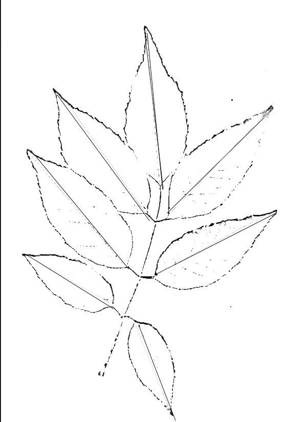 Прорисуйте контуры каждого листика