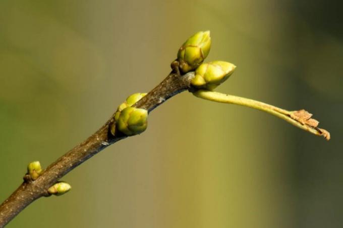 Как обрезать деревья весной