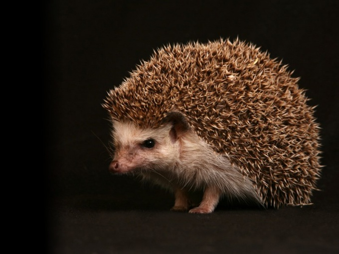 How to find the hedgehog