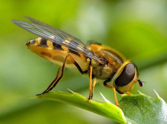 Как определить насекомое