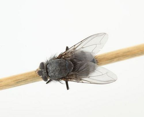 How you get rid of gnats in the kitchen