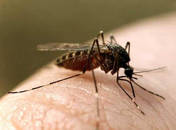 Как защититься от комаров во время отдыха на природе