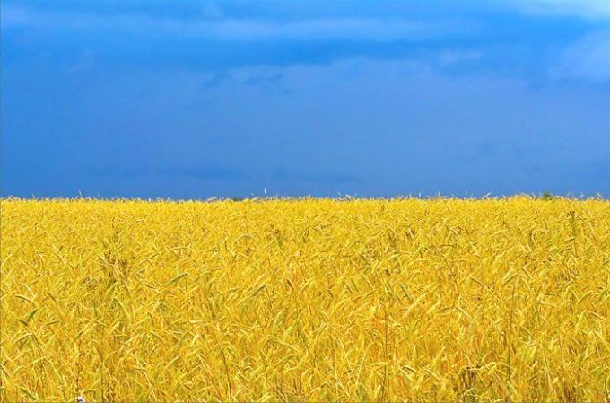 Как стремительно выучить украинский