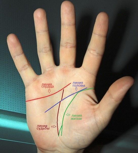 Существует несколько ярко выраженных основных линий, по которым можно узнать характер