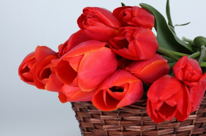 Как собрать букет с тюльпанами