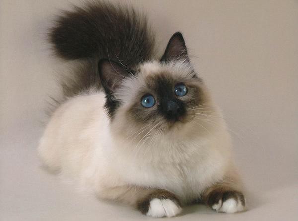 Как защитить кошку от паразитов