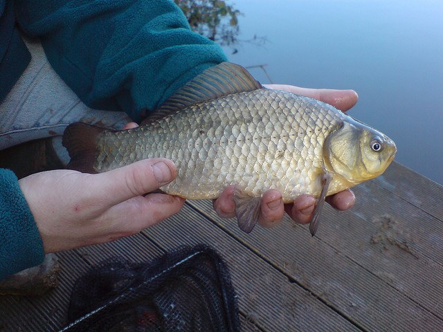 How best to catch carp