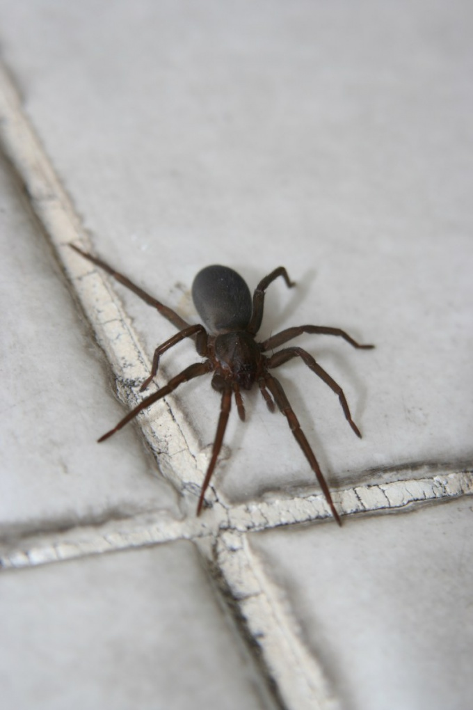 How to identify the species of tick