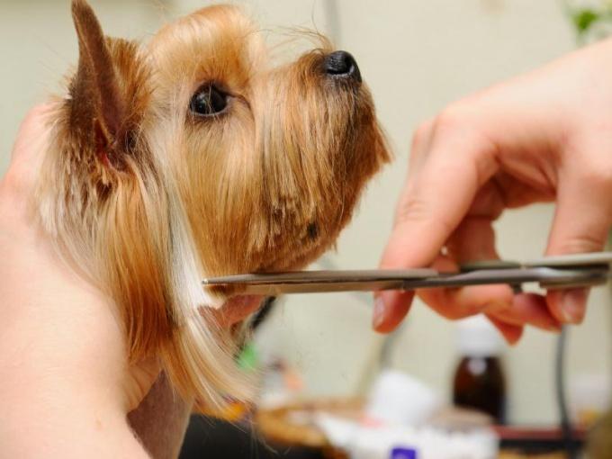 Как открыть салон  для животных