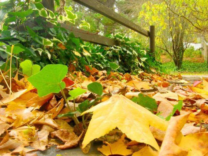 """Как написать сочинение на тему """"Летний сад осенью"""""""