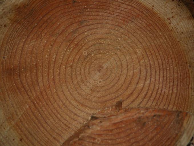 Как распознать красное дерево