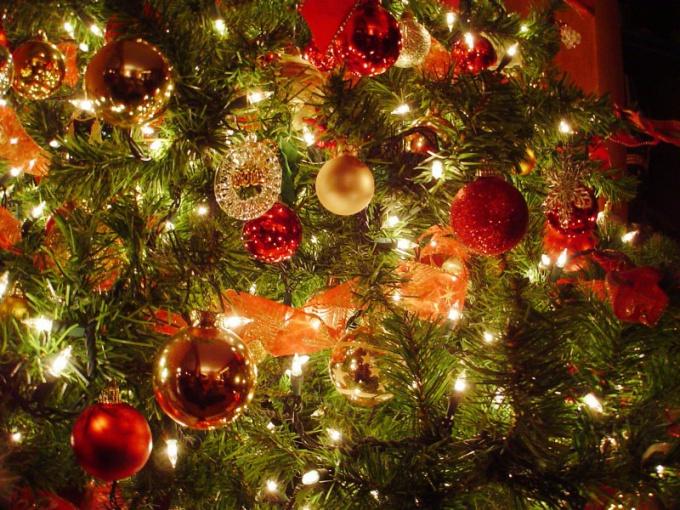Где взять елку на Новый год