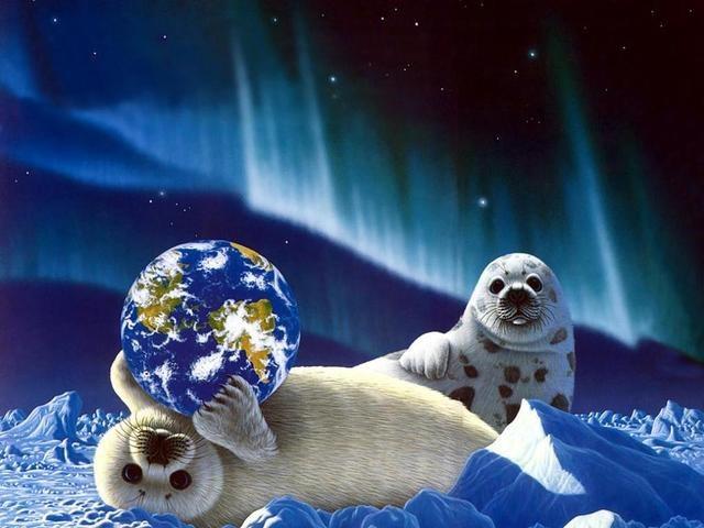 Как нарисовать тюленя