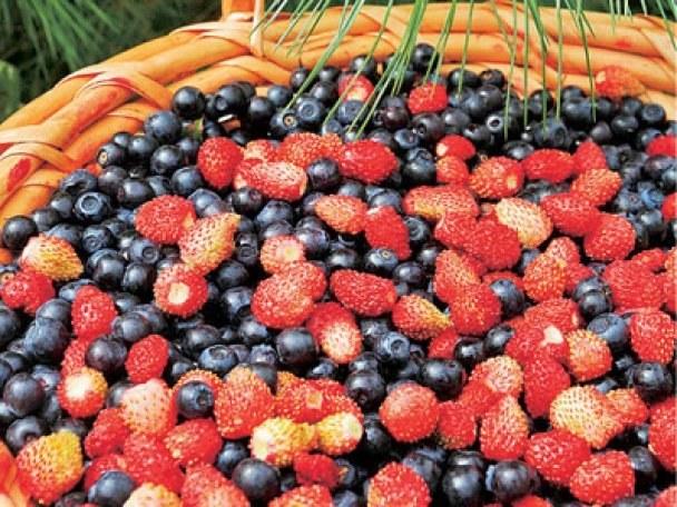 Как хранить лесные ягоды