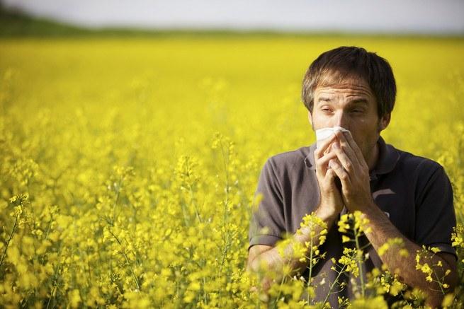 Как определить сенную лихорадку