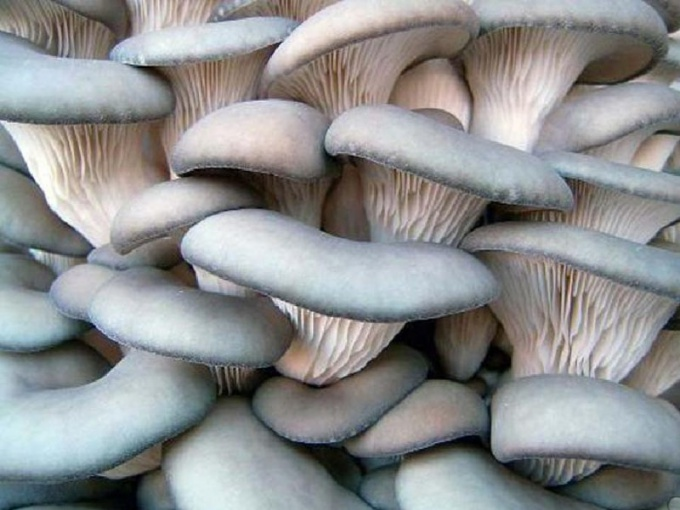 What you need for growing mushrooms at home