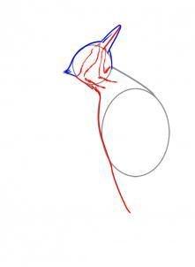Как нарисовать дятла
