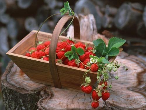 Как вручную опылить клубнику