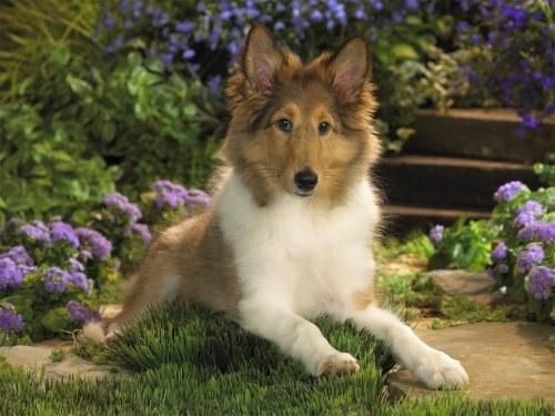 как отвадить бездомных собак от огорода