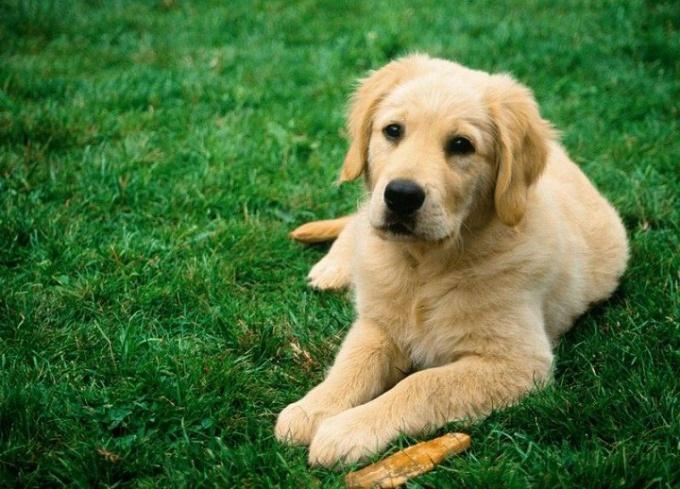 как убрать клещей с собаки