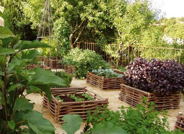 What to plant in the garden