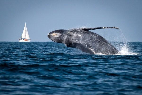 Что такое Всемирный день океанов
