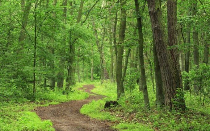 Как жить в лесу