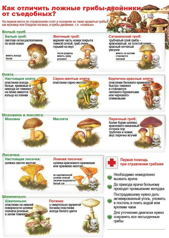 Как неотравиться грибами