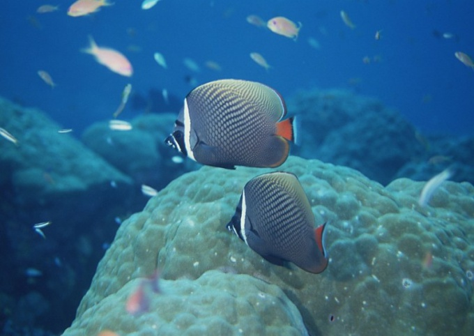 Как будут отмечать Всемирный день океанов