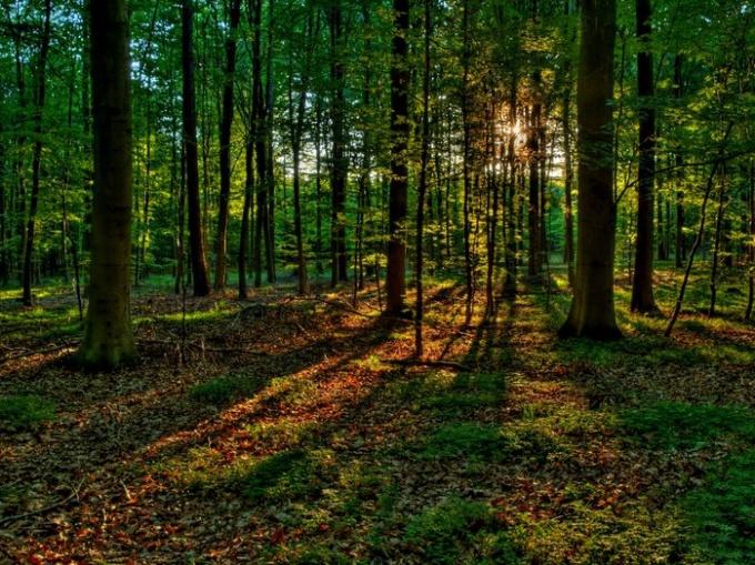 Как не заблудиться в лесу