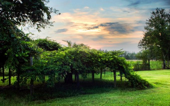Что представляет собой живая изгородь