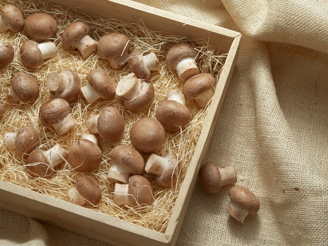 Как приготовить грибы в пряном рассоле