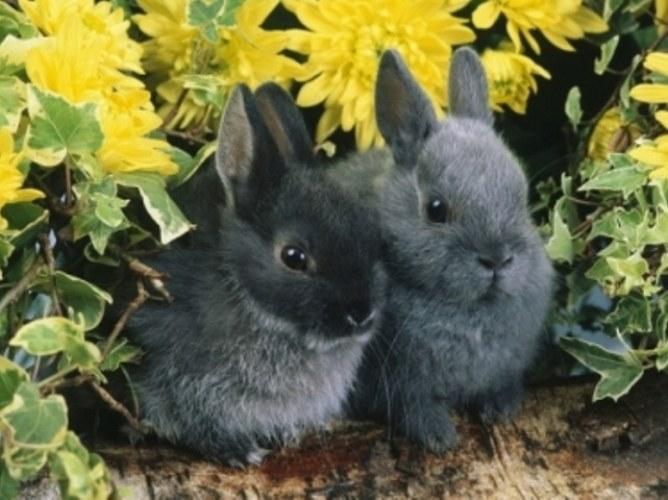 Как вырастить кролика дома
