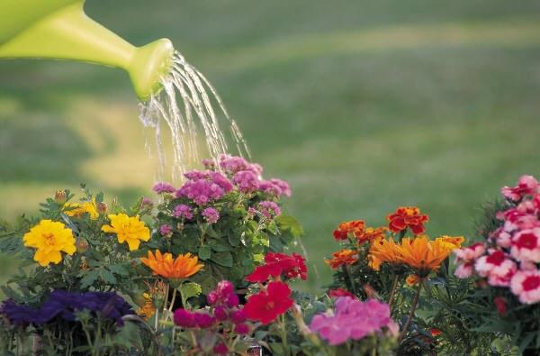 How often should I water the garden