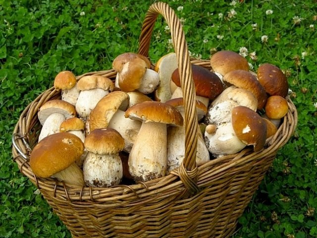 Как сделать грибной борщ с черносливом
