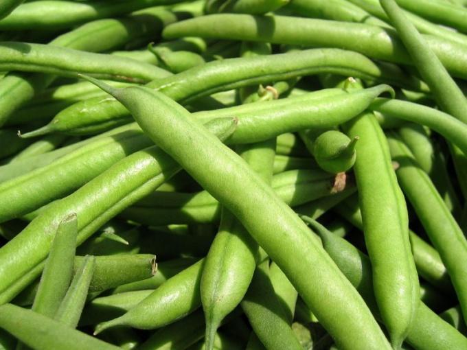 Как правильно выращивать бобовые