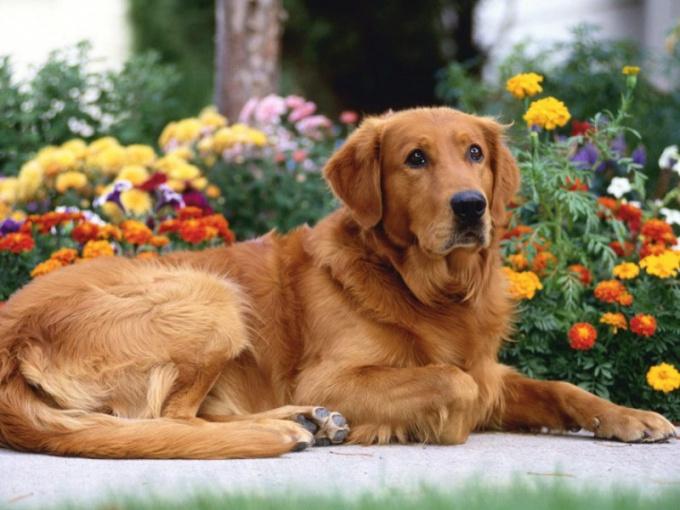 Как защитить собаку отклещейлетом